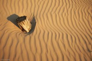 Vormen in het zand rondom een afgezaagde boom.