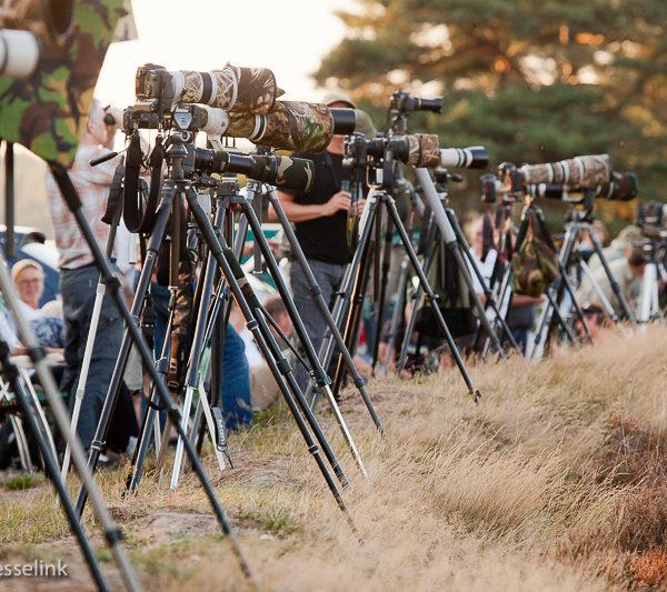 Massa natuurfotografie op de Hoge Veluwe tijdens de bronst van het edelhert
